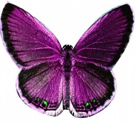 紫色蝴蝶模型