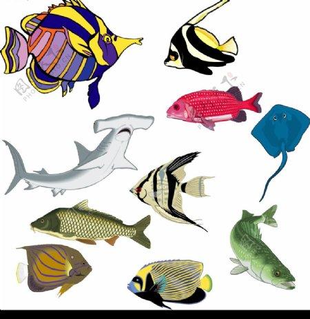 矢量鱼类图片