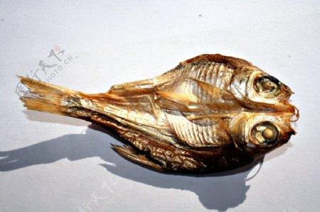 干鱼素材图片