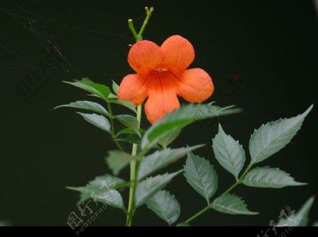 杭州花圃图片
