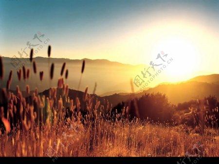 Vista高清晰植物壁纸图片