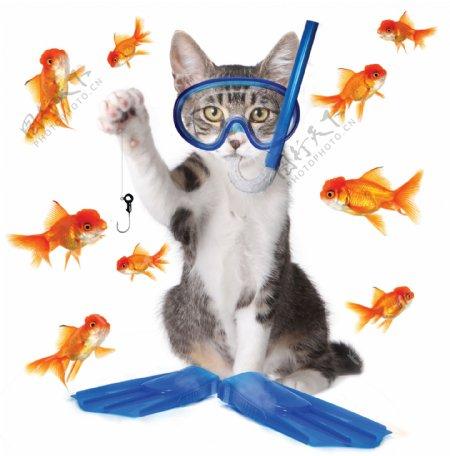 钓鱼的猫与金鱼素材图片