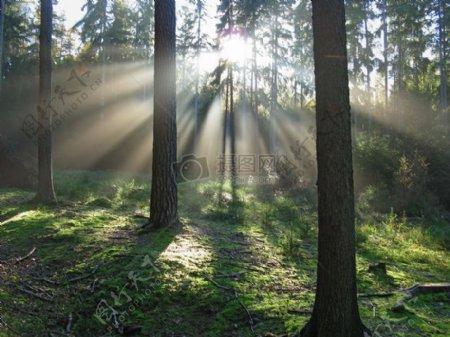 森林里的光芒