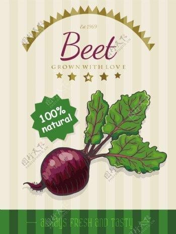有机甜菜海报设计矢量素材下载