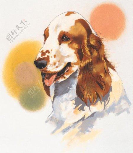 狗家禽家畜动物插图11
