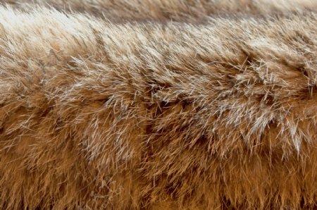 毛皮的山猫