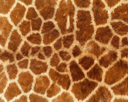 动物毛皮皮革背景图片