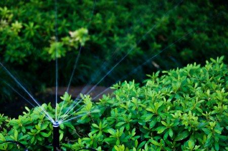 自动灌溉喷水头