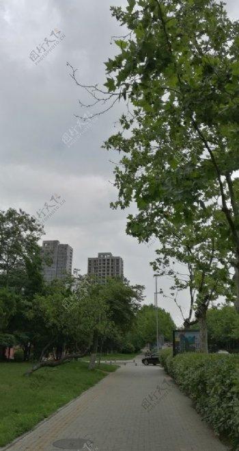 云下绿荫路
