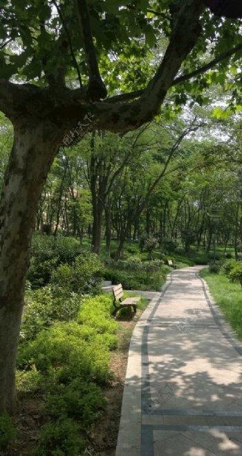 绿荫下的小路