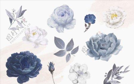 手绘水彩蓝玫瑰花卉插画
