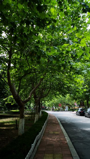 校园绿荫路