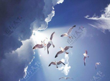 蓝天乌云太阳阳光海鸥