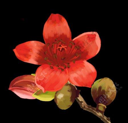 绽放木棉花花朵