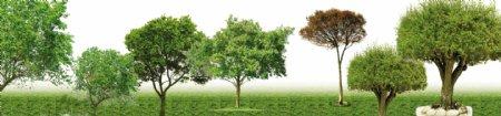 松树枣树桃树树柏树海