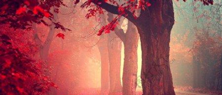深秋森林树木梦幻背景素材
