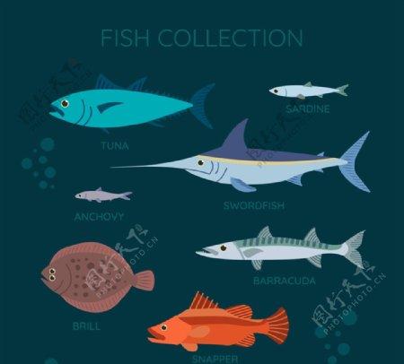 彩色海洋鱼类图片
