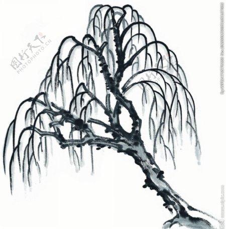 水墨柳树图片