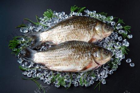 水产鱼类图片