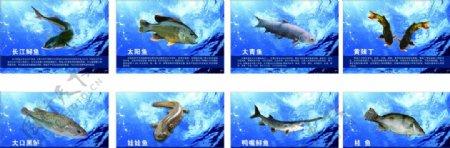 鱼类介绍图片