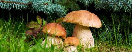 好看的野生蘑菇图片