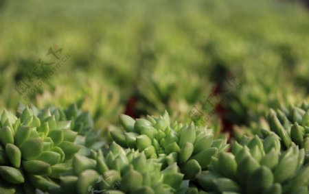 多肉植物图片