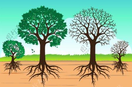大树根图片