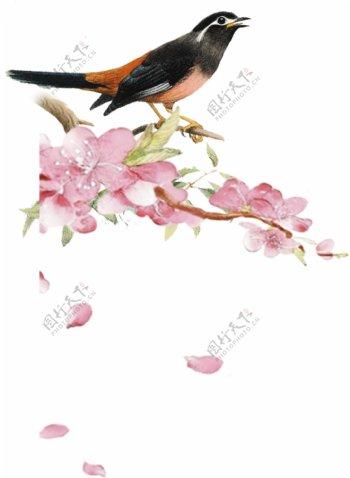 喜鹊梅花图片