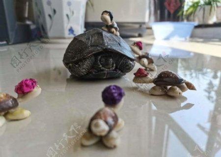 乌龟一家图片