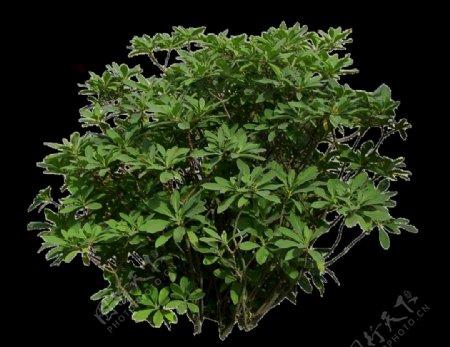 发财树分层PSD素材图片