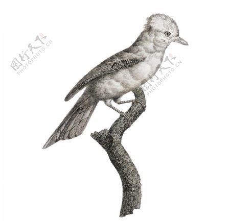 手绘鸟类插图图片