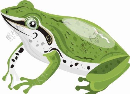 青蛙矢量图片