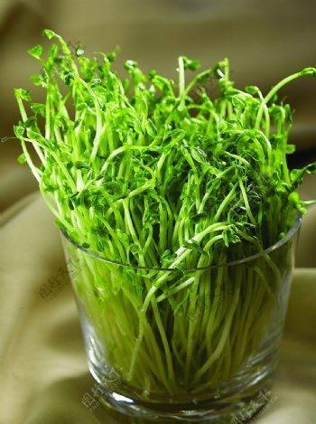 浙菜豌豆苗图片