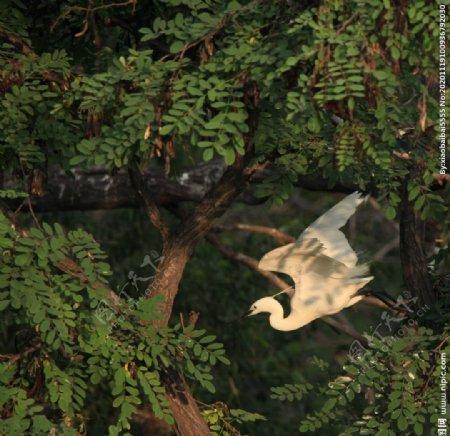 白鹭家园图片