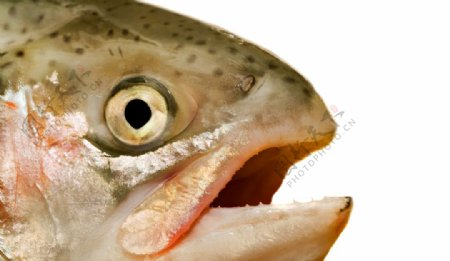 鱼头鱼嘴美食食材海报背景素材图片
