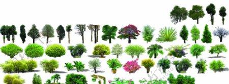 植物树木花草免扣合集图片