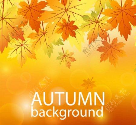 橙色秋季树叶图片