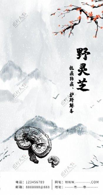 中华仙草灵芝深山野灵芝APP图片