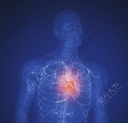 创意人体器官图片