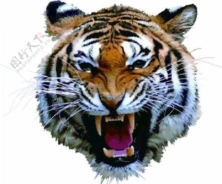 老虎头像图片