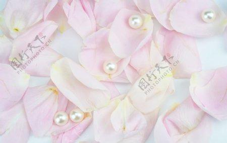 粉色玫瑰花瓣拍摄素材图片