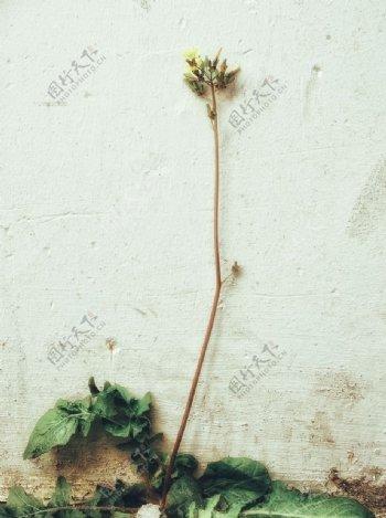 墙角小花图片