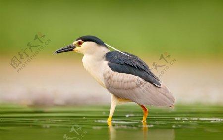 好看的水鸟摄影图片