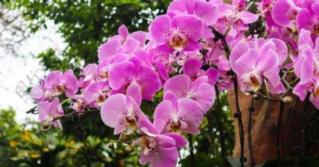 户外枝头上的兰花图片