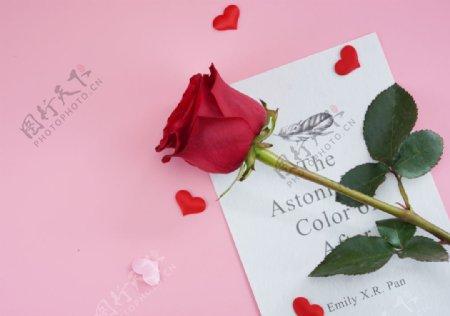 浪漫唯美玫瑰花摄影图片