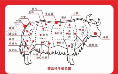 牛部位图图片