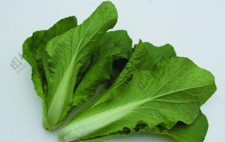 蔬菜白菜图片