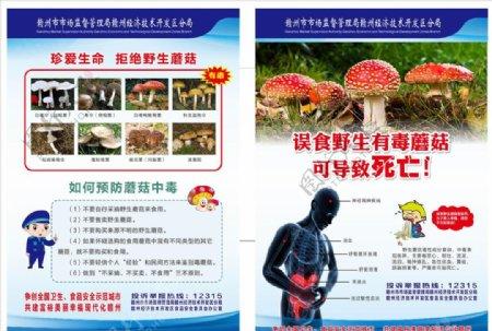 预防野生毒蘑菇图片