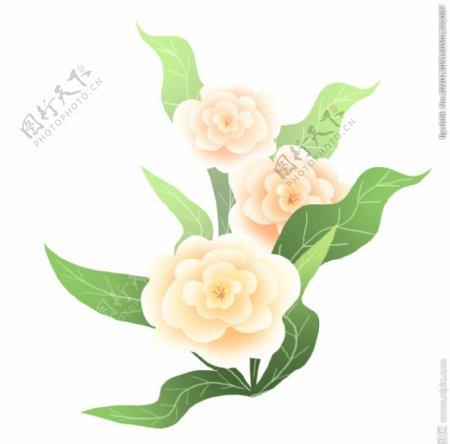 牡丹花插画图片