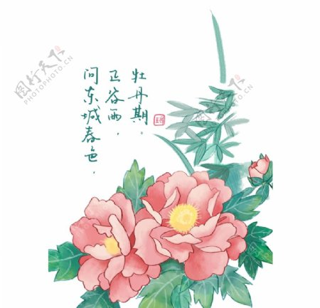 牡丹花手绘素材图片